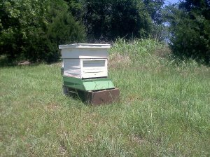 Once more, I have three hives on my property.